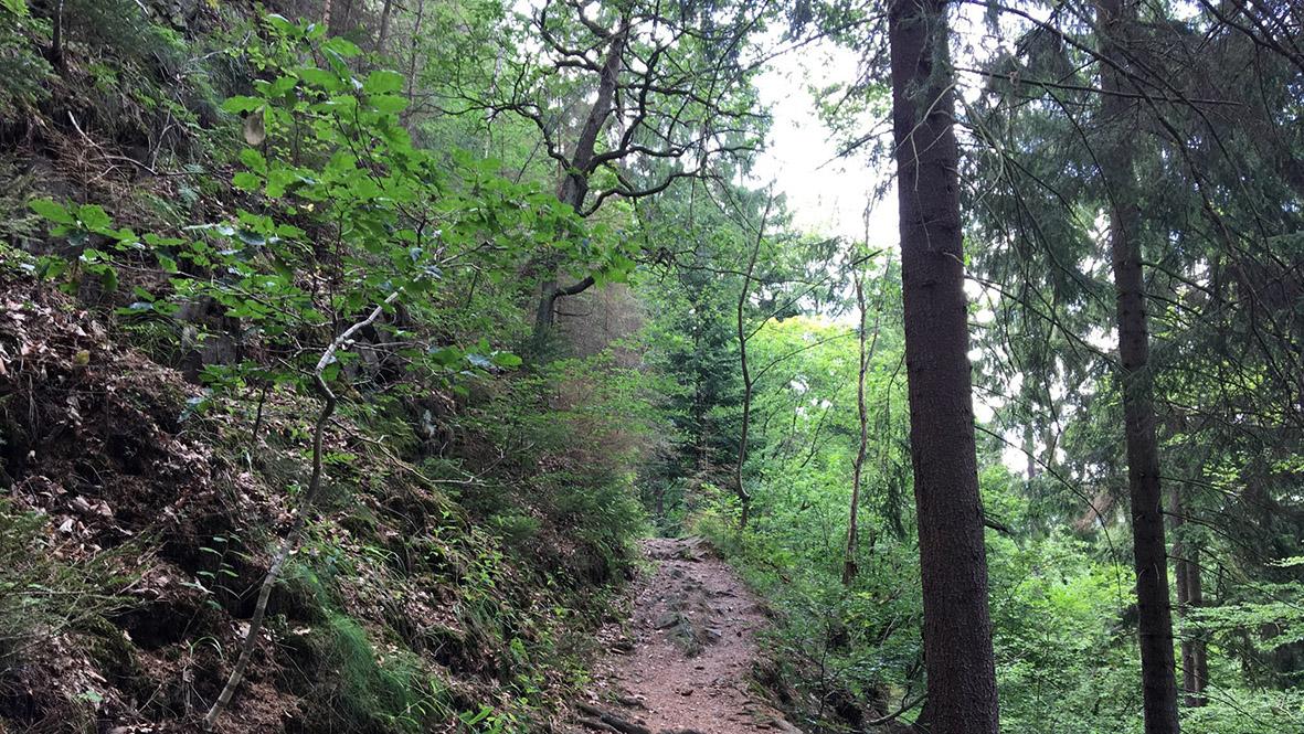 Wanderweg im Grundtal bei Chomutov (Komotau). Foto: Chris Bergau