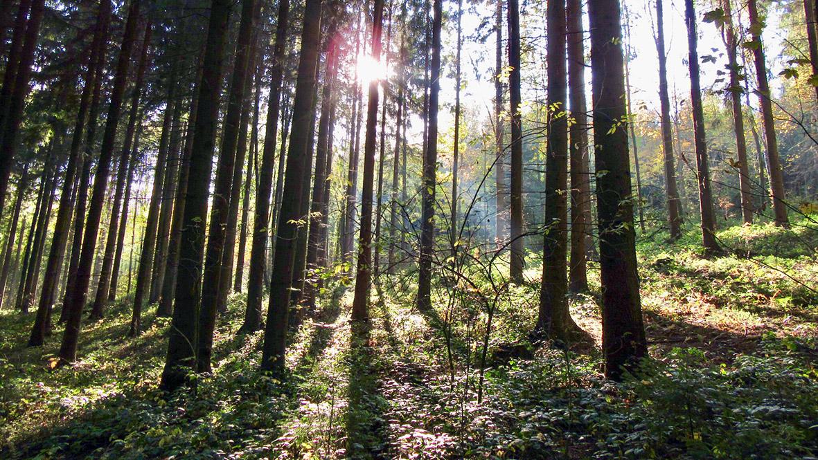Die letzten sonnigen Herbsttage im Erzgebirge. Foto: Chris Bergau/bergau-media.com