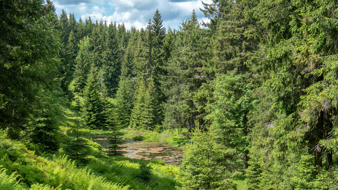 Im Zechengrund bei Kurort Oberwiesenthal. Foto: Chris Bergau