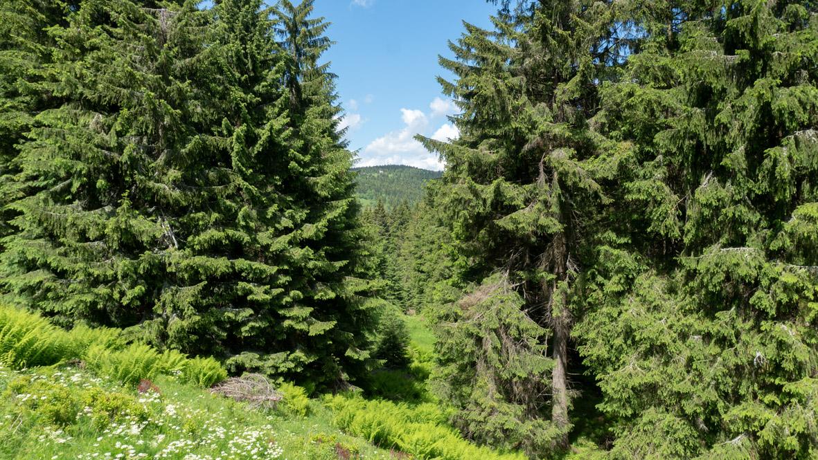 Blick auf den 1.205 Meter hohen Kleinen Fichtelberg oder auch Hinterer Fichtelberg, vom Zechengrund aus. Foto: Chris Bergau