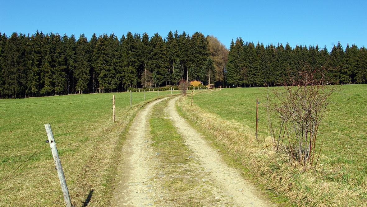 Weg in den Wald bei Geyer. Foto: Chris Bergau