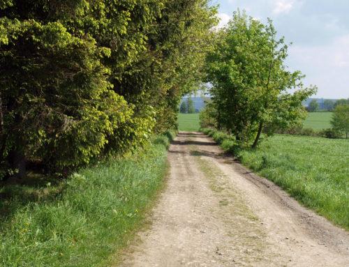 Gelenau – Auerbach – Gelenau
