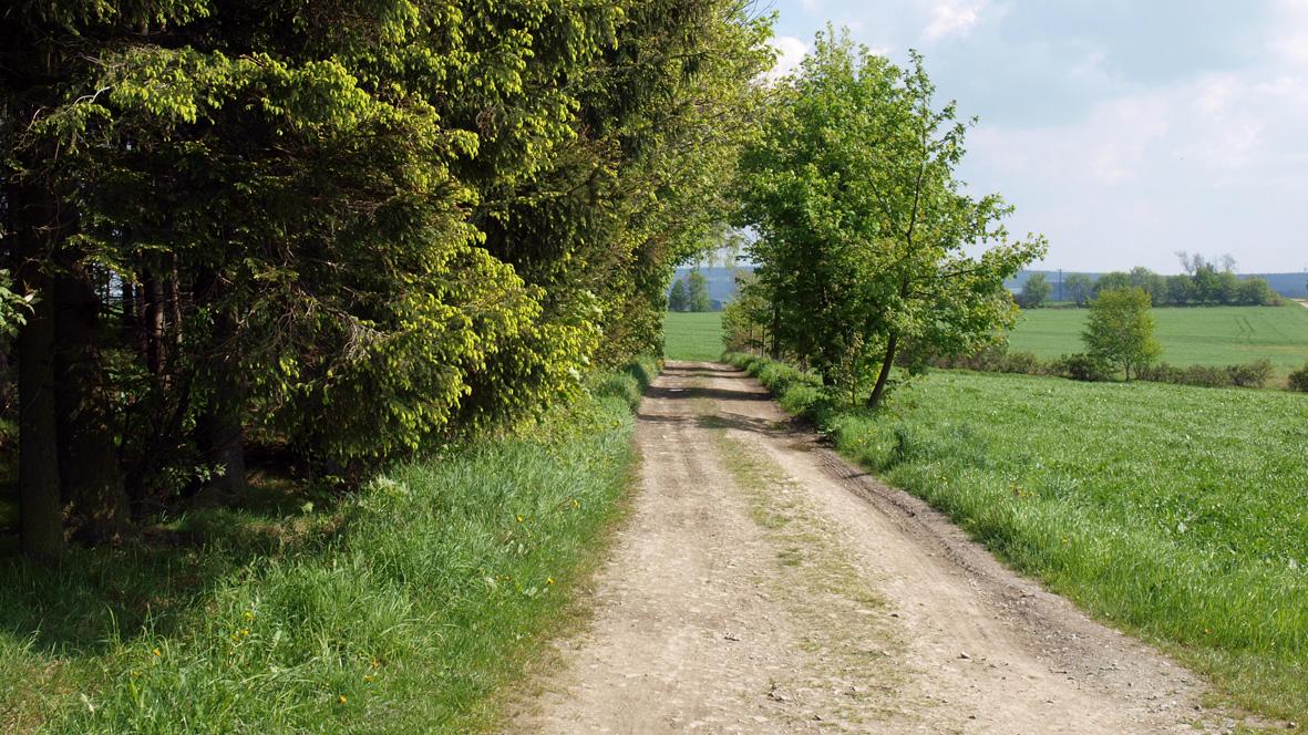 Wanderweg bei Gelenau. Foto: Chris Bergau