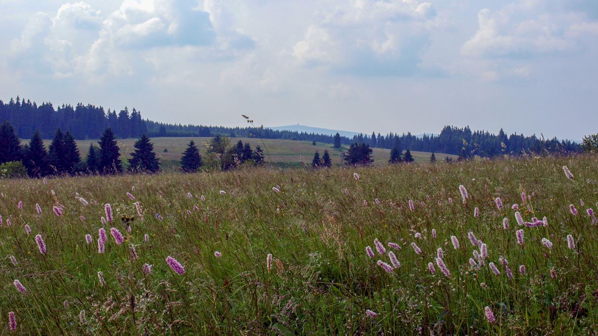 Erzgebirgswiese bei Horní Blatná (Bergstadt Platten) im Hintergrund der 1.018 Meter hohe Auersberg. Foto: Chris Bergau