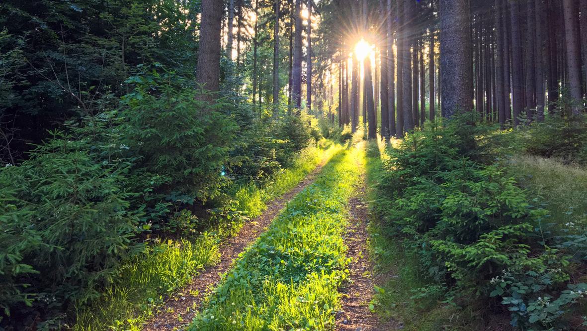 Die Sonne hüllt die Natur in eine fast magische Lichtstimmung. Foto: Chris Bergau