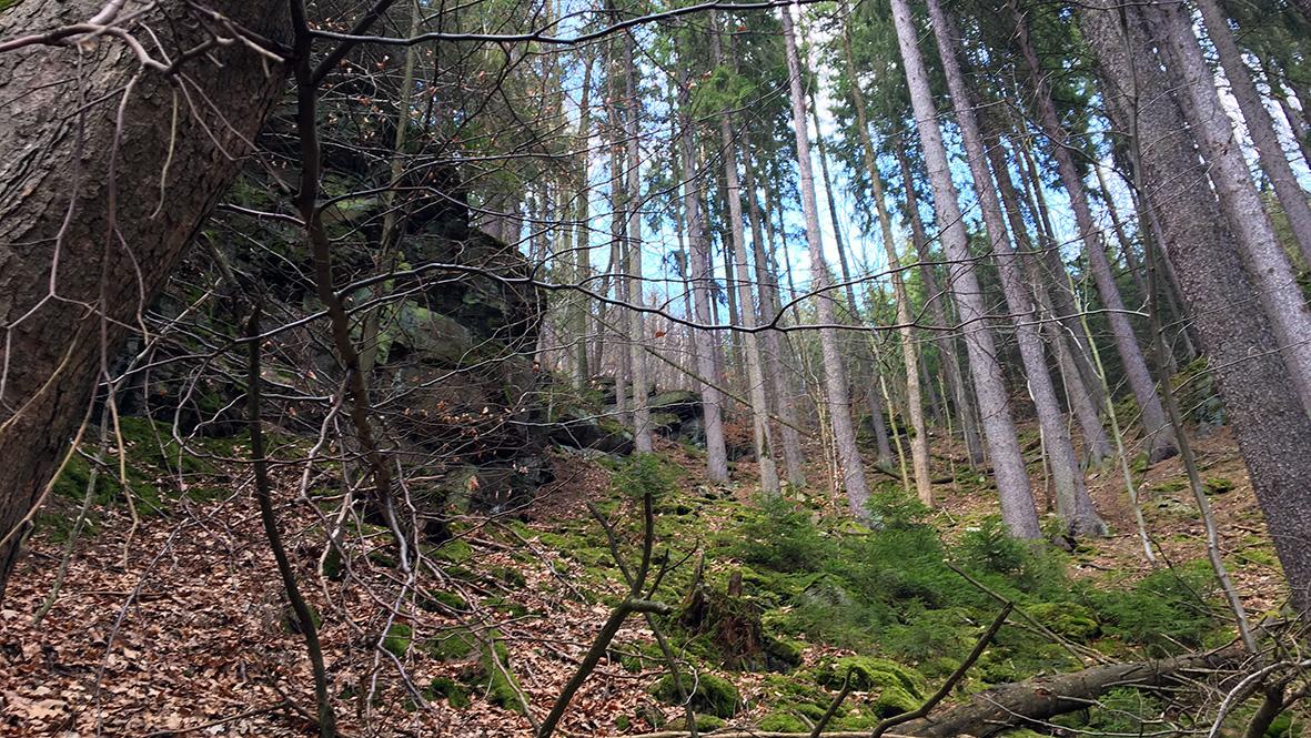 Steile Hänge beim Wolkenstein im Zschopautal. Foto: Chris Bergau/bergau-media.com